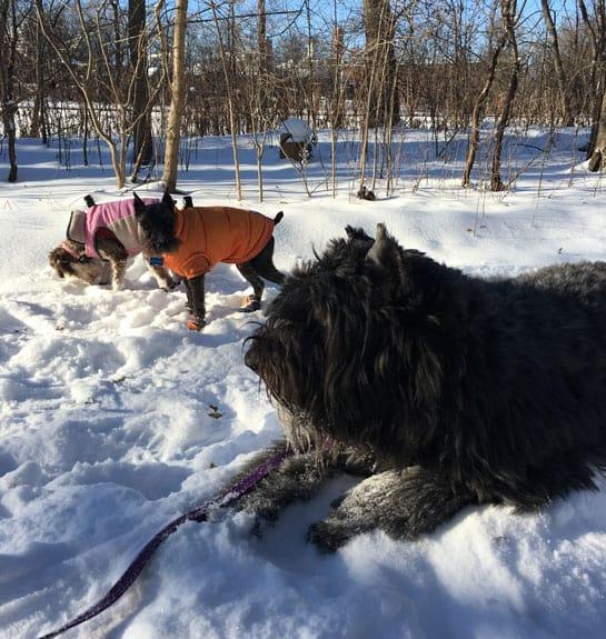 dog walker rates per hour