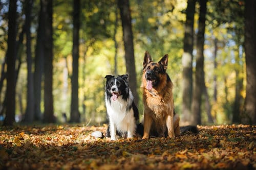 dog walking service, dog walkers