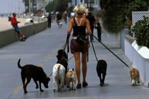 dog walker dog walking tips canine care