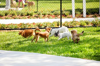 canine care, Chicago suburb dog walkers